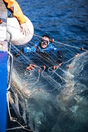 healthy-seas-divers-pulling-out-a-so-called-nylon-6-fishing-net-used-to-produce-econyl-yarn-from-the-adriatic-sea-in-croatia-1.jpg